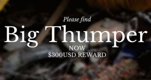 Please find Big Thumper $300 USD reward