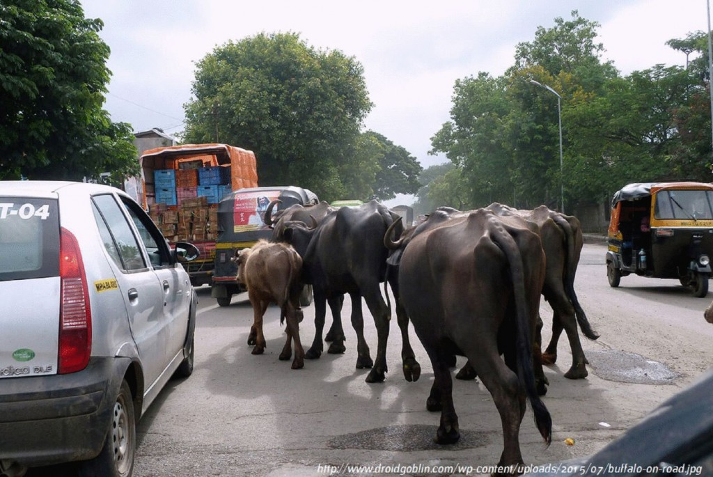 elephants on a toad during a motorbike trip